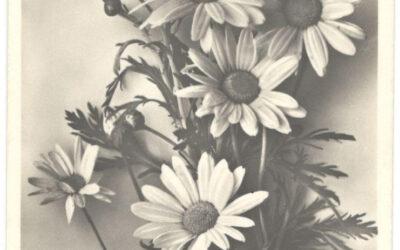 Josef Heurtens, due cartoline dell'8 ottobre 1944